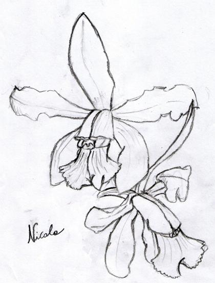 Disegni e orchidee for Disegni di fiori a matita