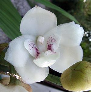Quanto costa spedire un mazzo di rose yahoo answers for Costo orchidea