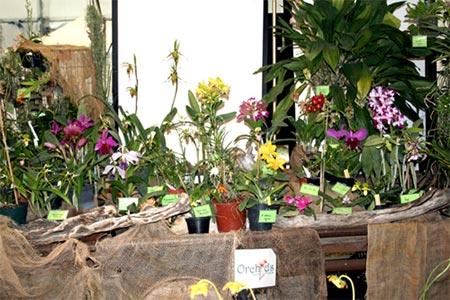 Mostra di orchidee a ferragosto for Orchidee in casa