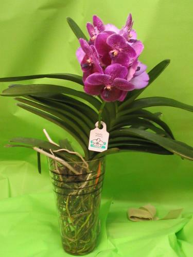 Vanda in vasi di vetro solo moda for Vaso orchidea