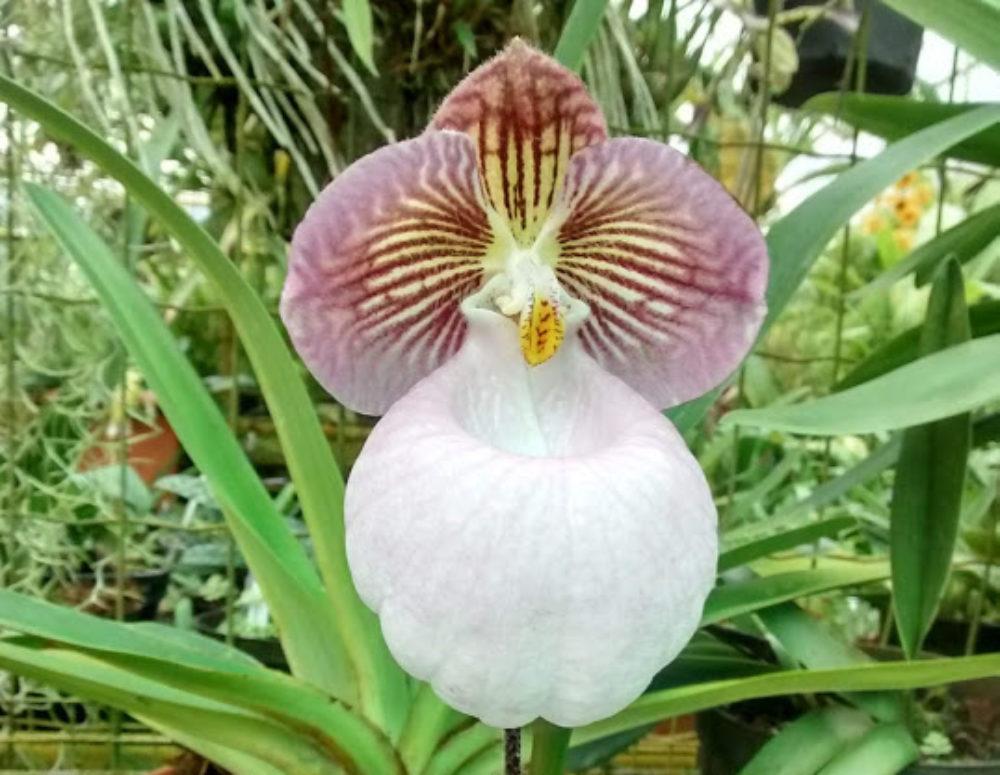 Orchids.it